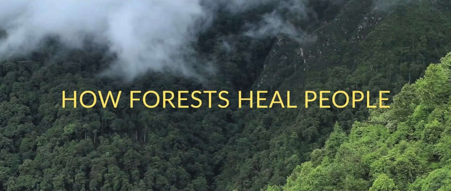 The Healing Force of Nature