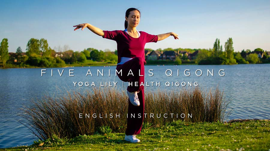 Five Animals Qigong with English Instruction